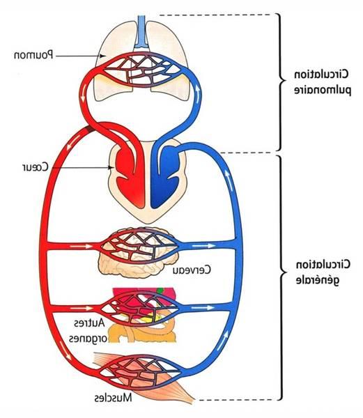 traitement varice et grossesse