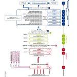 Acheter Traitement varices ramq | Avis & prix - Somasnelle Gel