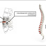 Classement Douleur articulaire soir | Flexa Plus Optima - Test complet