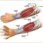 Découvrir Arthrose genoux exercices | Flexa Plus Optima - Avis des forums