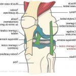 Acheter Douleur articulation haut de la cuisse | Flexa Plus Optima - Test & opinions