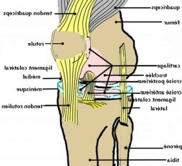 douleur articulation genou que faire