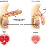 Dr Extenda - Le lait, le sperme, le dos. et le sang? représentations | Test & recommandation